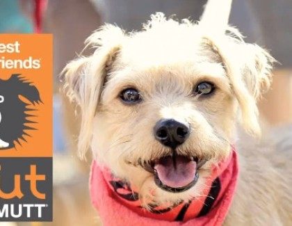 Join us at STRUT YOUR MUTT in NYC September 26th
