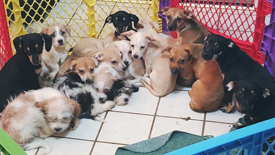 The Dog House Rescue And Adoption