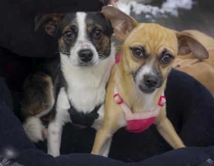 Adoptions at Petsmart New Hyde Park!