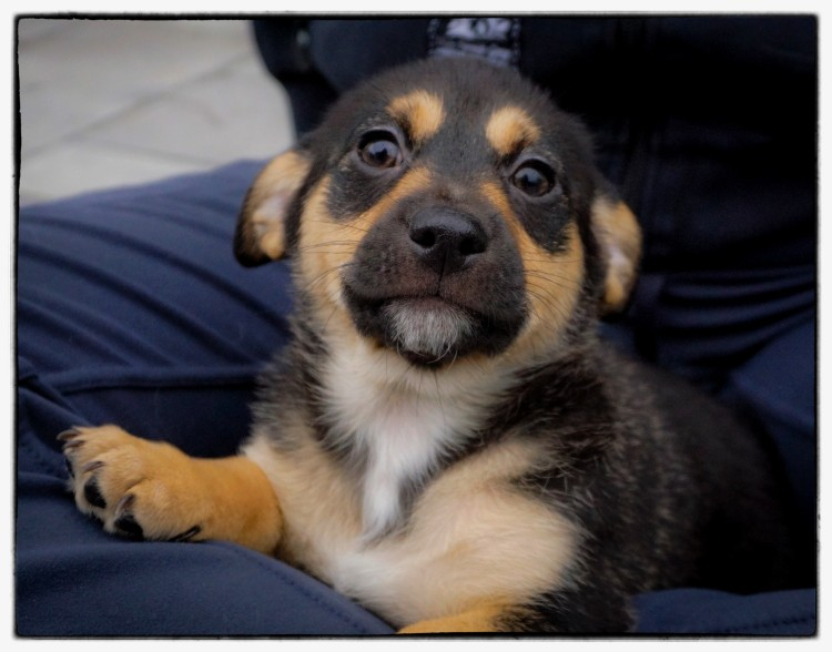 DOG BITING: FOREWARNED IS FOREARMED