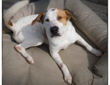 Tick Alert: Pet Owners Beware