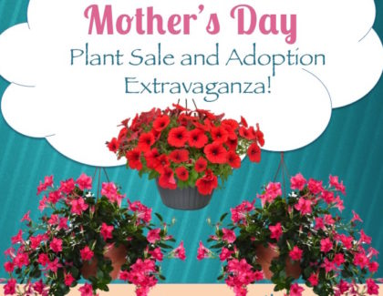 Mother's Day Plant Sale Sunday 5/8