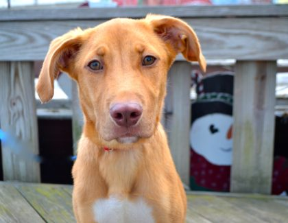July 4th Adoptions on the Mile