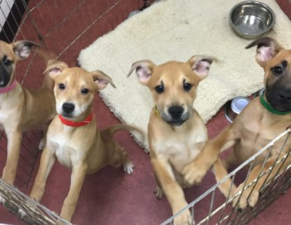 DOUBLE ADOPTION EVENTS SATURDAY JULY 9th