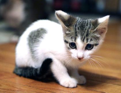 Rescue Tails: Nessie