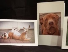 Make Your Dog an RHR Greeting Card STAR!