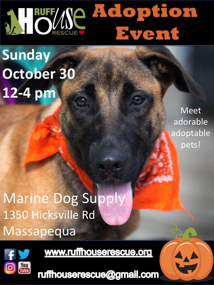 Adoptions at Marine Dog Supply in Massapequa