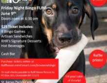 Bow Wow Bingo!! Friday June 9th 6:30pm Hurry and get your table together and join the fun!