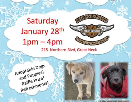 Adoption Event: Saturday January 28th at Miracle Mile Harley Davidson