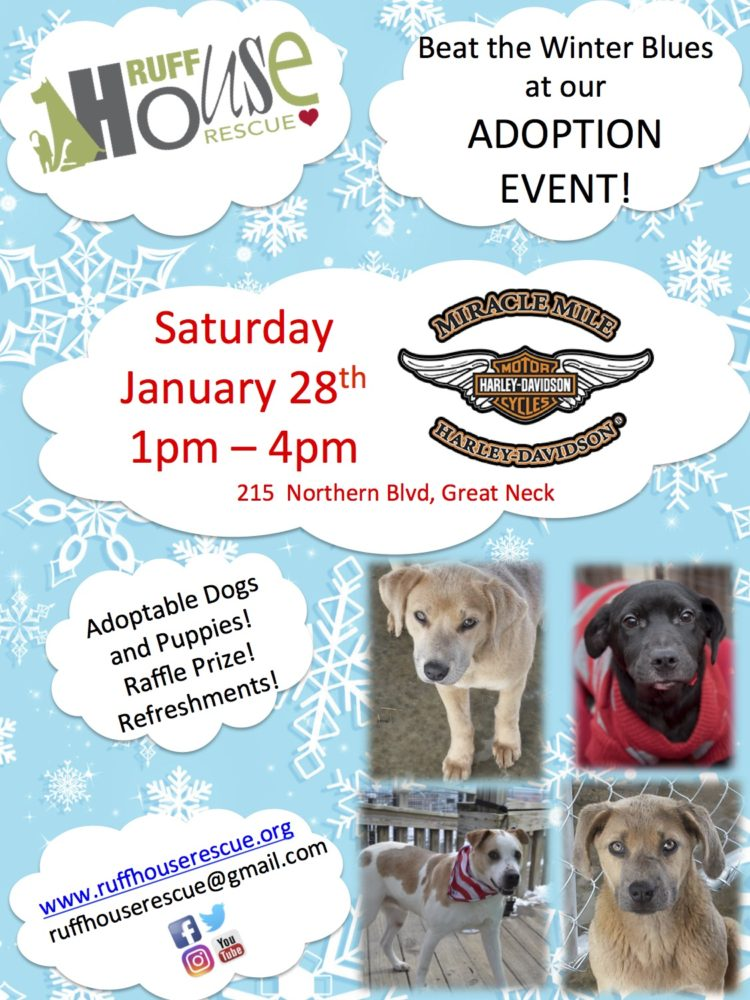 Adoption Event: Saturday January 28th at Miracle Mile Harley Davidson