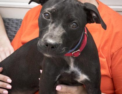Adoptions Saturday July 1 at Petsmart Glen Cove