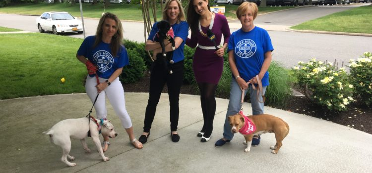 Dog Day Friday on News12 June 16th