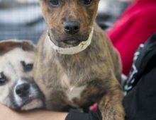 Adoptions at Petsmart Farmingdale this Saturday June 24th