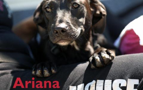 Adoptions at Petsmart New Hyde Park Saturday July 8th