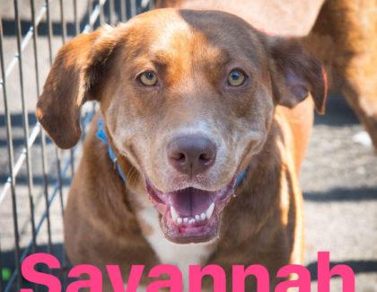 Adoptions this Saturday July 22nd at PetSmart New Hyde Park