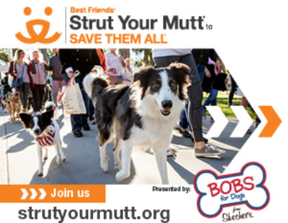 Adoption Event at Strut Your Mutt