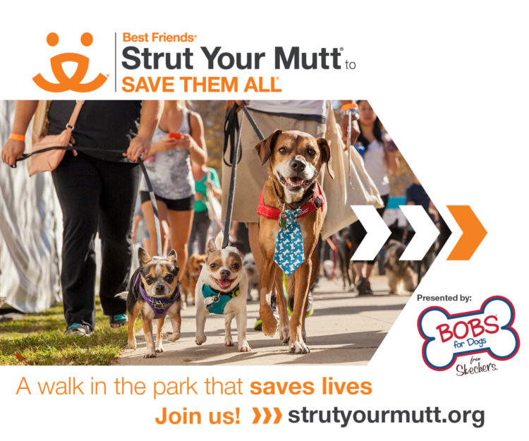 Join the Ruff House Rescue Team and STRUT YOUR MUTT –  Saturday October 7th