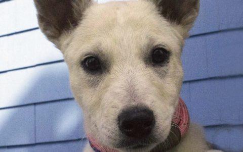 Adoptions Sunday 11/12 at Petsmart Farmingdale!