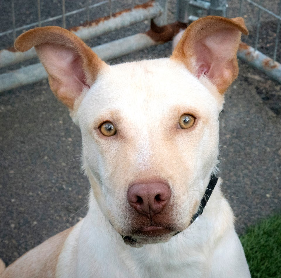 Adopt A Dog Day Petco
