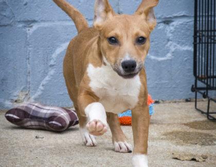 Adoptions Sunday 2/4/18 at Petsmart Huntington