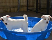 Adorable Puppies Ready for Fur-Ever