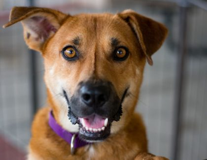 Adoptions Events this Weekend 6/23-6/24