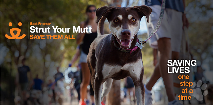 Strut Your Mutt JOIN THE RHR TEAM