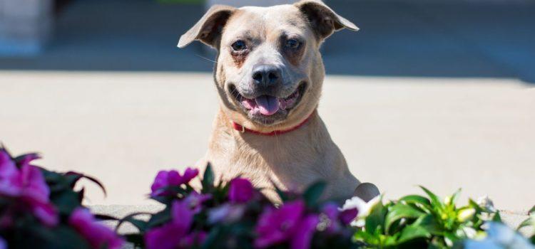 Adoptions this Weekend 7/14-7/15 at Petsmart Huntington