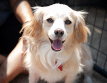Adoption Events This Weekend August 18-19