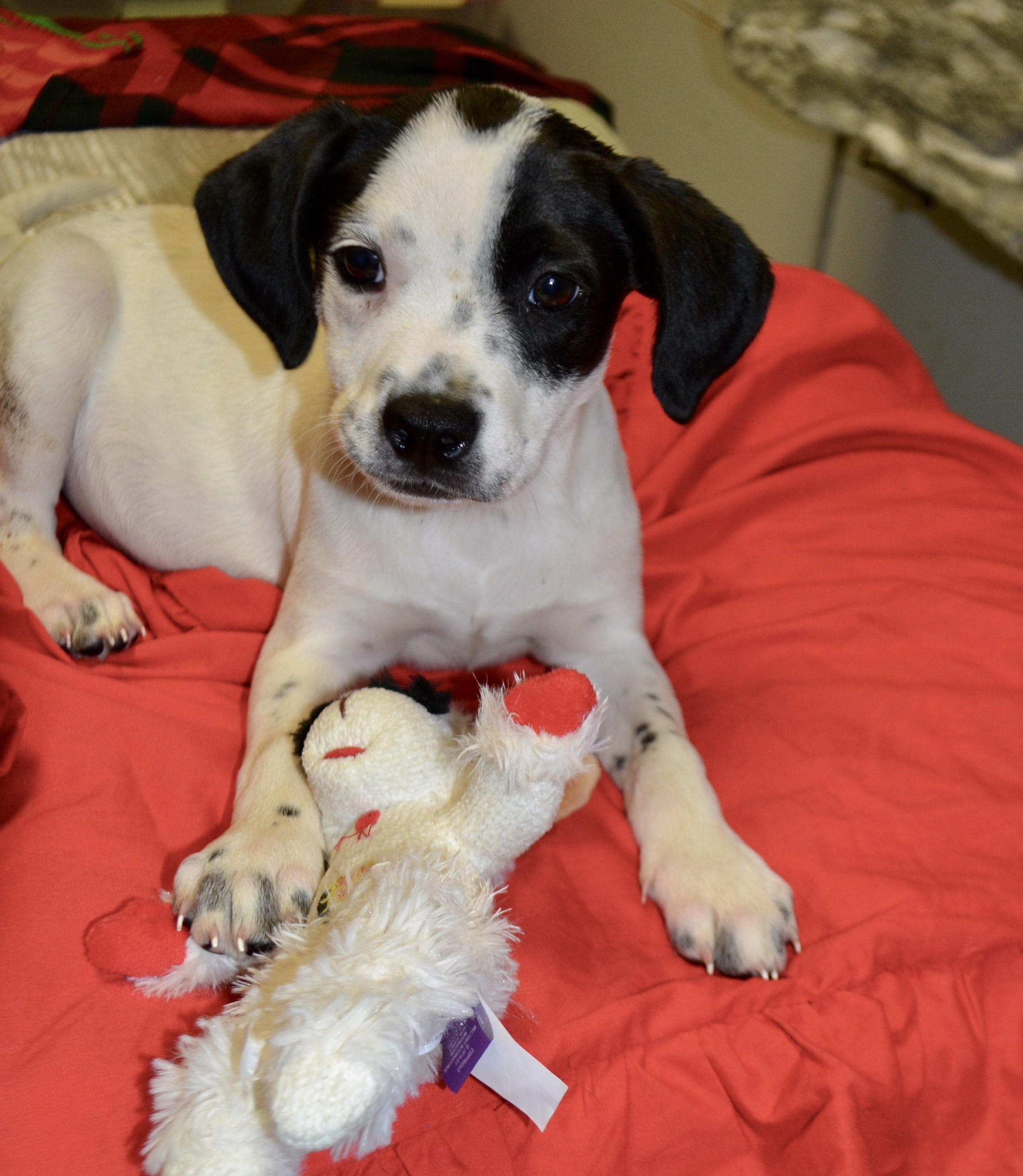 Adoptions at Petco Levittown | Ruff House Rescue