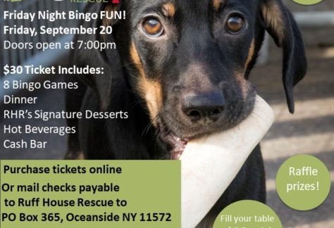 Ruff House Rescue | Where Adopting A Homeless Pet Is The Standard