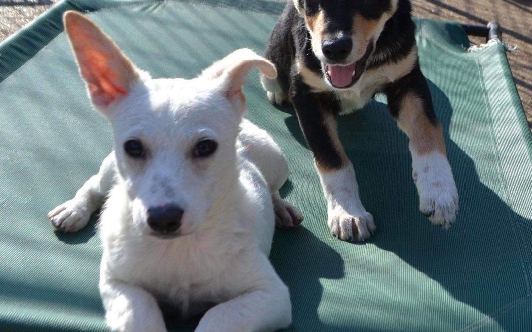 Adoptions at Petco Levittown